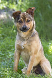 Portrait young mongrel dog. Young mongrel of dog in a garden Royalty Free Stock Photo