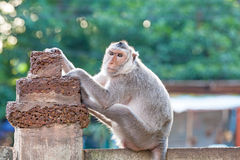 Portrait of young monkey be inattentive  and sitting at the conc. Rete fence Stock Image