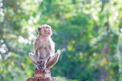 Portrait of young monkey be inattentive  and sitting at the conc. Rete fence on natural light Stock Photo