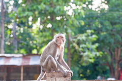 Portrait of young monkey be inattentive. And sitting at the concrete fence on natural light Stock Photography