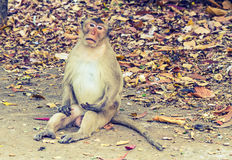 Portrait of young monkey sitting at the park processed in vin tagestyle Royalty Free Stock Photo
