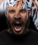 Portrait of young screaming man as tiger Royalty Free Stock Image
