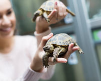 Portrait of young smiling cheerful woman holding turtles Stock Image