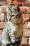 Portrait of a young kitty Royalty Free Stock Photo