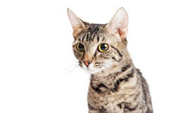 Portrait Young Tabby Cat Looking Side Stock Images