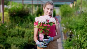 Portrait, young woman gardener holding white blooming hydrangea in flowerpot in her hands, against background of