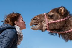 Young woman fell in Love with dromedary in Morocco royalty free stock image