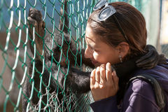 Portrait of a young woman playing and hugging spider monkey Royalty Free Stock Photos