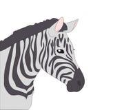 Portrait of zebra drawing color, vector vector illustration