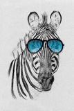 Portrait of zebra drawn by hand in pencil in sunglasses Stock Photos