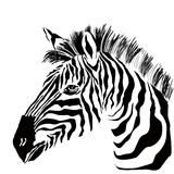 Portrait of zebra on the white background Royalty Free Stock Image