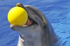 Portraitdelphin mit einer Kugel im Mund Stockfotos