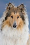 Portraithund Lizenzfreie Stockfotos