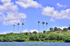 Portraits of the Brazil.  Alagoas. The beautiful island with its coconut trees in the city of Piaçabuçu. State of Alagoas, Brazil Stock Photography