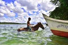 Portraits of the Brazil.  Alagoas. Boy and horse south in the waters of the great San Francisco River Stock Image