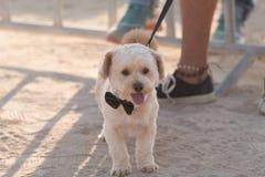 Portraits de chien images libres de droits