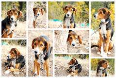 Portraits of a dog. Portraits of a beautiful young dog royalty free stock photography