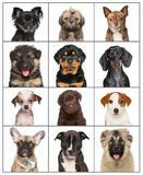 Portraits of dog puppies on a white background Royalty Free Stock Photos