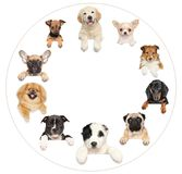 Portraits of dog puppies on a white background. Portraits of puppies positioned in a circle. Group of dogs on a white background royalty free stock photography