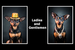 Portraits of dogs. Man and woman. Ladies and gentlemen. Royalty Free Stock Photo