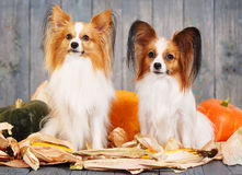 Portraits of two adult dogs Royalty Free Stock Image