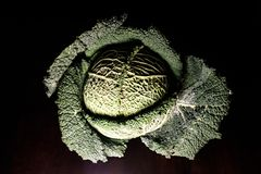 Portraits of vegetables - green art object stock photo