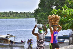 Portraits of the world. Alagoas Brazil. Coconut transported across the São Francisco river, being carried by men from the village of Penedinho. City of Piaç Stock Image