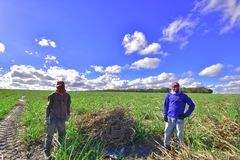 Portraits of the world. Alagoas Brazil. Men working on a cane field, picking straw for livestock Stock Photos