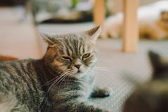 A portraiture of a cat in the room filled with soft light and use a soft focus. Relax and comfort. Royalty Free Stock Image