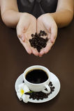Portraiture of holding coffee seed stock images