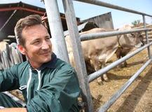 Portraot do fazendeiro feliz com vacas Fotografia de Stock Royalty Free