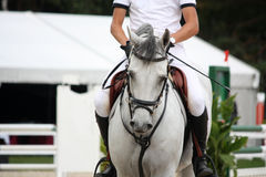 Portraot of white horse during competition Stock Photo