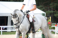 Portraot of white horse during competition Stock Images