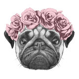 Portrat of Pug Dog with floral head wreath. Stock Photos