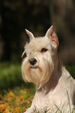 Portrate of white dog Royalty Free Stock Photos