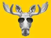 Portret łoś amerykański z okularami przeciwsłonecznymi Fotografia Royalty Free