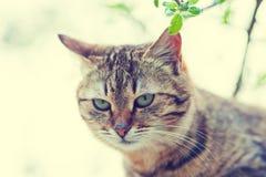 Portret śliczny szary kot zdjęcia royalty free