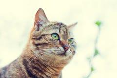 Portret śliczny szary kot fotografia royalty free