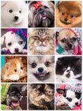 Portret śmieszni zwierzęta, set Fotografia Stock