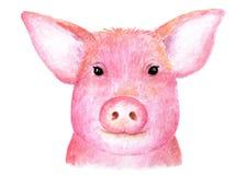 Portret świnia świniowaty cukierki beak dekoracyjnego latającego ilustracyjnego wizerunek swój papierowa kawałka dymówki akwarela Zdjęcia Royalty Free
