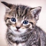 Portret av den gulliga kattungen Arkivfoton