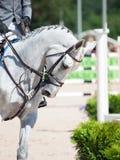 Portret biały sportive koń przy rywalizacją Fotografia Royalty Free
