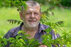Portret brodata Kaukaska starszego mężczyzny pozycja pod morwowego drzewa cieniem obraz royalty free