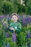 Portret chłopiec w lata polu lupine Fotografia Stock