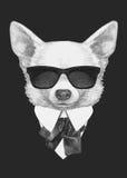 Portret chihuahua w kostiumu royalty ilustracja