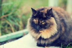 Portret cycowy kot zdjęcie stock