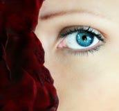 portret, czerwona róża Obraz Stock