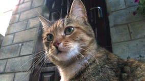 Portret Czerwoni koty outdoors zbiory wideo