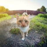 Portret czerwony kot outdoors w wiosce w górę, wykoślawienia fisheye perspektywiczny obiektyw zdjęcia royalty free