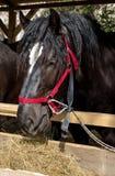 Portret de cheval Photographie stock libre de droits